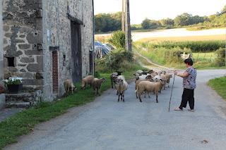buurvrouw met haar schapen