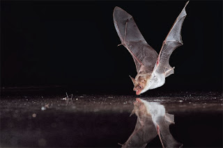 Bat learn to fly