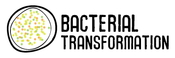 AP Biology Blog - Mark Ingram P.7: pGLO Transformation Experiment  AP Biology Blog...