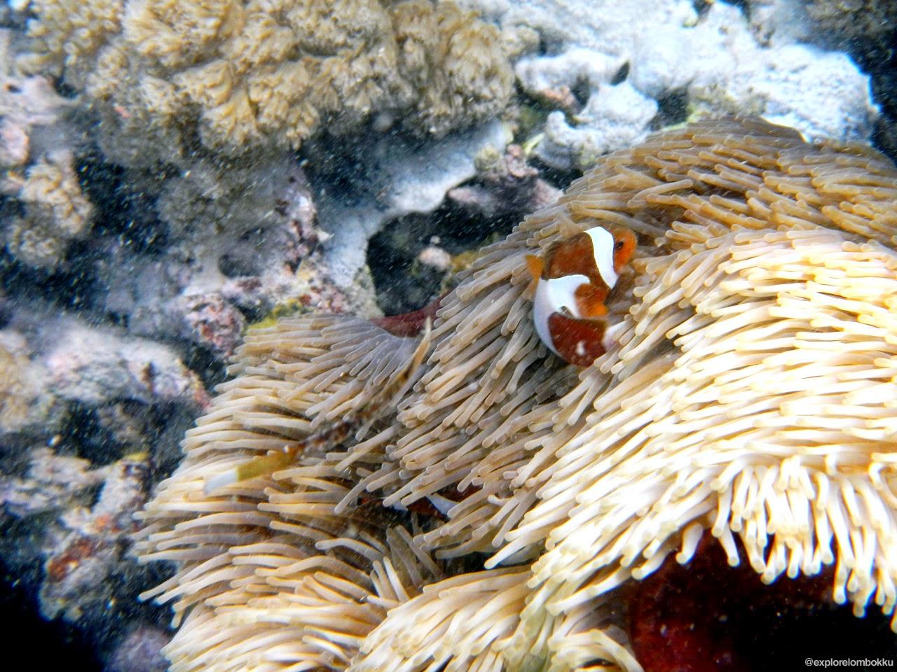 Keindahan alam bawah laut Gili Kondo