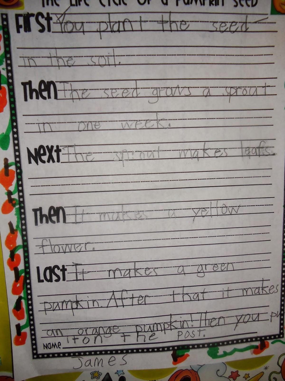 Patties Classroom Pumpkin Life Cycles