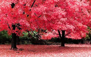 Beautiful Tree And Flowar Wallpapers