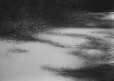 Renie Spoelstra Recreatiebos # 41, 2008 charcoal on paper 240 x 350 cm