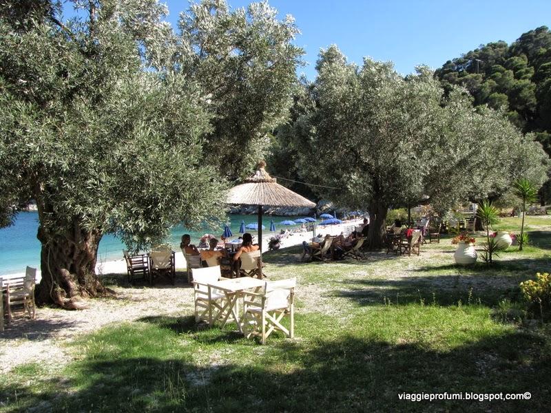 Alonissos: relax sotto gli ulivi sulla spiaggia di Leftos Ghialos