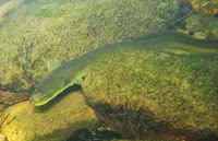 http://sciencythoughts.blogspot.co.uk/2014/06/japanese-eel-classified-as-endangered.html