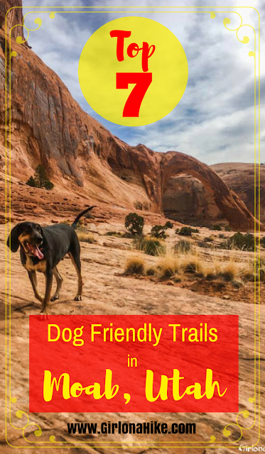 7 Best Dog Friendly Trails in Moab, Utah, Hiking in Moab with Dogs