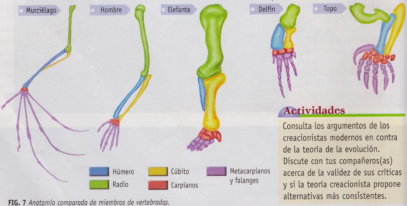Vistoso Ejemplos Anatomía Comparada Componente - Imágenes de ...