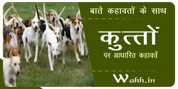kutto-(dog)-par-kahawat