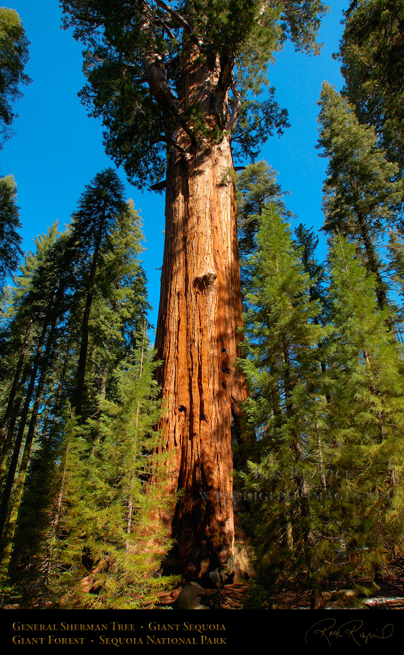 Interesting Things Do You Know World S Biggest Tree