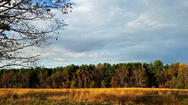 image of a treeline past a golden field, full of brightly colored changing leaves