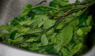 APRIL SEVEN: Some Leafy Vegetables and Herbs Found in Nigeria and