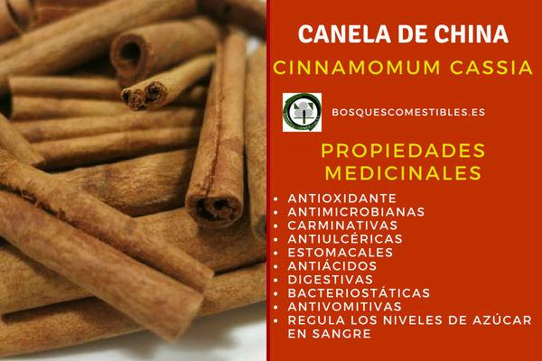 La Canela de China, Cinnamomum cassia, tiene propiedades antioxidantes, antimicrobianas, estomacles