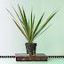 This Spiny Plant Is Sending People to the Emergency Room