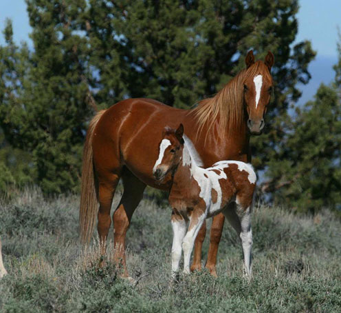 Animals Wallpapers: beautiful horse pictures - photo#46