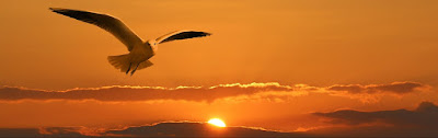 Burung Mulai Belajar Terbang lagi Setelah Bumi Dihantam Meteor