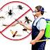 اكبر شركة مكافحة حشرات بالقصيم و طرق التصدى للحشرات و النصائح الهامة