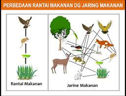 Ekosistem (Pengetian, Komponen, Interaksi, Tipe/Macam dan Contohnya)