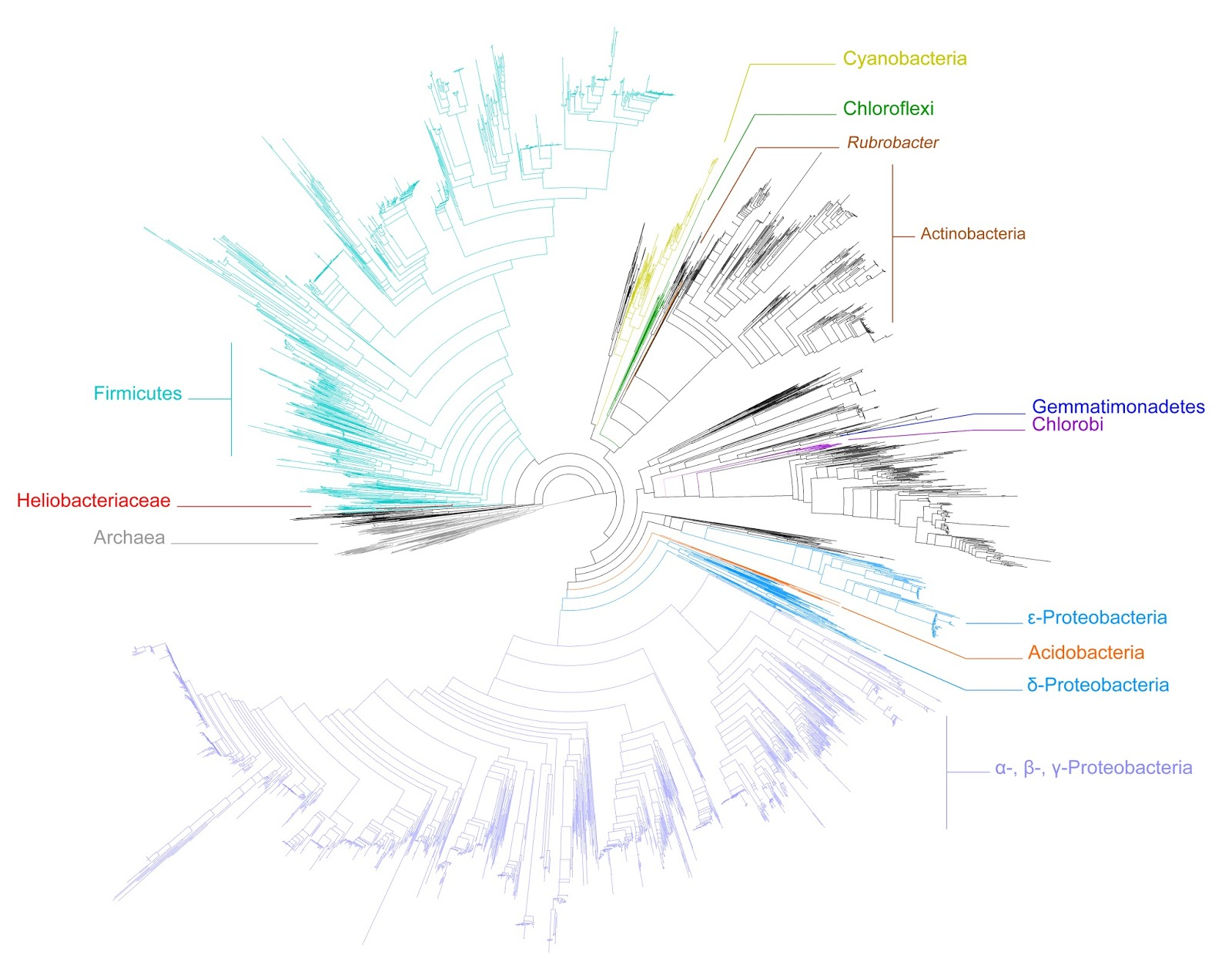 hight resolution of tree of life highlighting phototrophic clades the tree is taken from segata et al 2013 it s open access and freely available