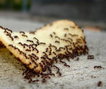 Berikut artikel tentang alasan semut suka gula.. semut makan gula..kenapa semut suka yg manis..menyukai gula..teori semut mengejar makanan manis