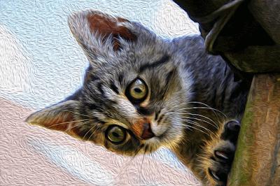 Asfixia de Gato Pierre Loti