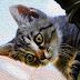Asfixia de Gato Pierre Loti Relato Completo