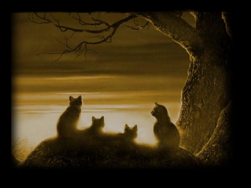 Warriors cats wallpaper