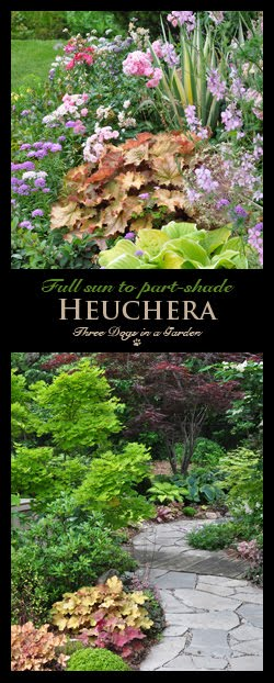 Heuchera Brighten Up any Spot in the Garden