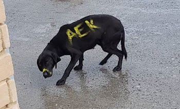 Λεσβιακό τρίο με σκύλος
