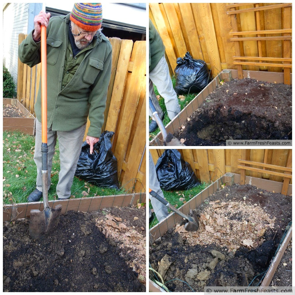 a collage of an old farmer showing how he amends the soil in a raised bed with shredded leaves.