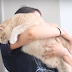 Couple Adopted a 33-Pound Cat and Decided to Begin His Weight Loss Journey