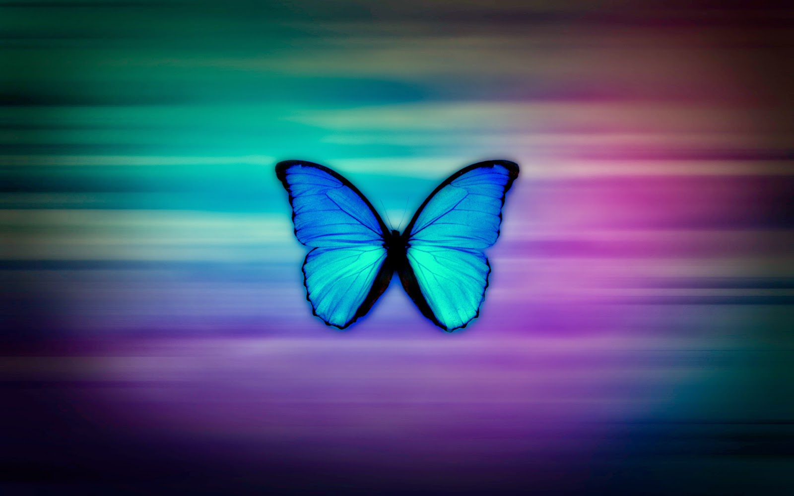 Pictures Of Real Butterfly Background Catfactsblog