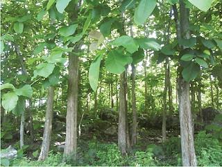 Lembar Kerja Siswa Potensi Sumber Daya Hutan