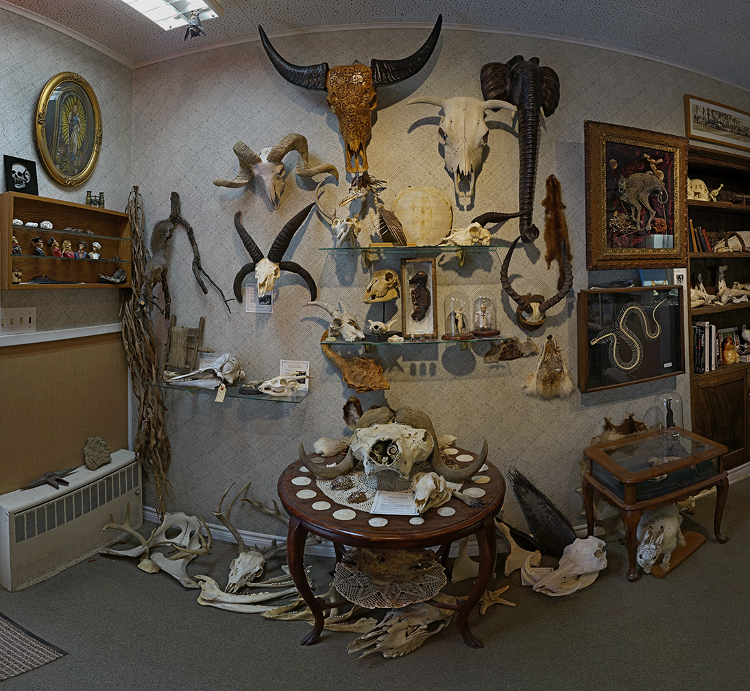 cranium furniture. Animal Skulls Along The Left Wall As You Come In. Cranium Furniture