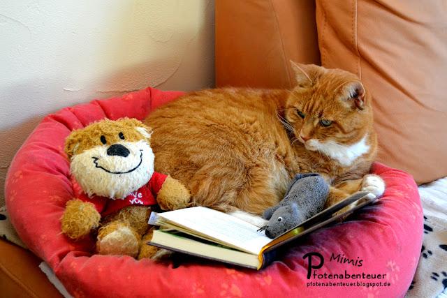 Katze Mimi liest mit ihren Kumpels