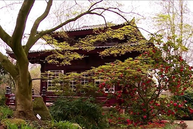 Besuch Im Japanischer Garten In Leverkusen Lokalzeit Junkie