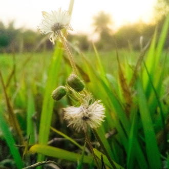 Grass | grass flower | ground