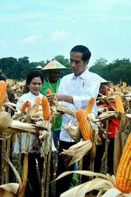 Presiden Jokowi Berpesan Agar Hak Pengelolaan Hutan Sosial Digunakan untuk Kepentingan Produktif - Info Presiden Jokowi Dan Pemerintah