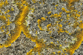 Lichen on a gravestone