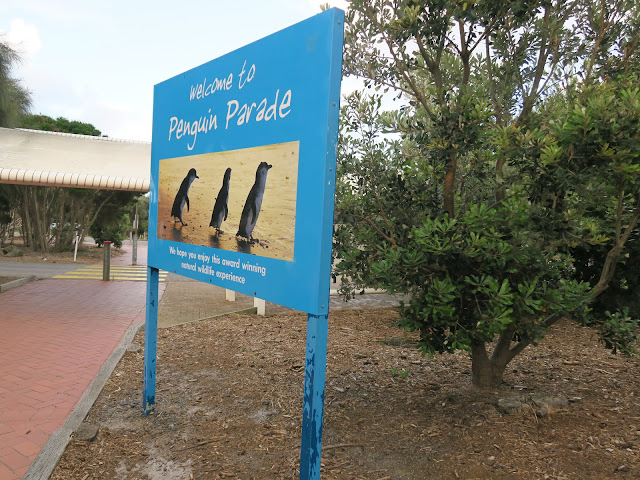 penguin parade entrance