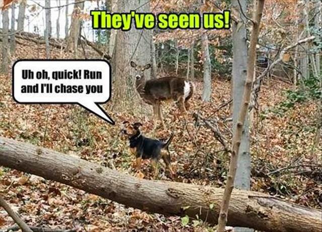 Funny Animal Captions Part   Pics