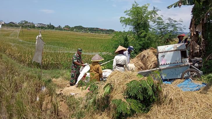 Panen Padi Poktan Sida Mulya Kelurahan Sidakaya kec Cilacap Selatan  Mencapai 4,7 Ton per Hektar