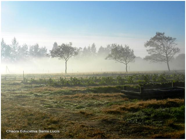 Neblina matinal - Chacra Educativa Santa Lucía