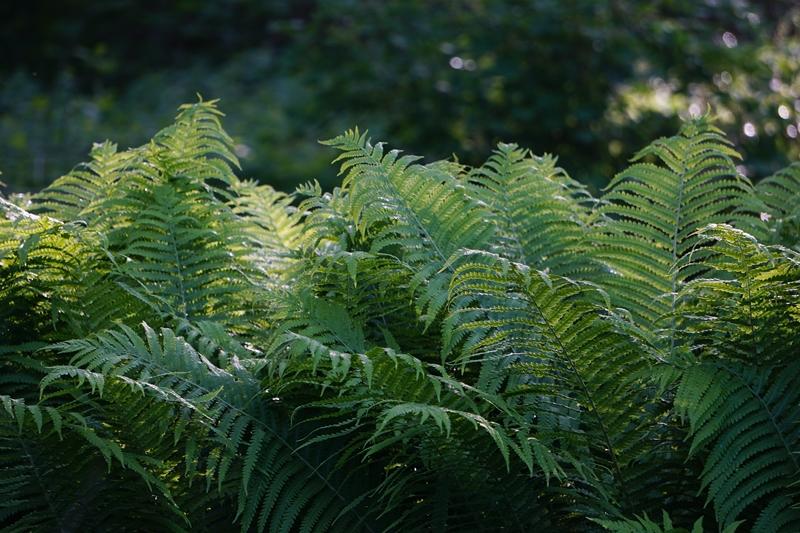 luonto, metsä