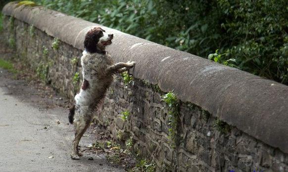 ¿Perro Suicida?