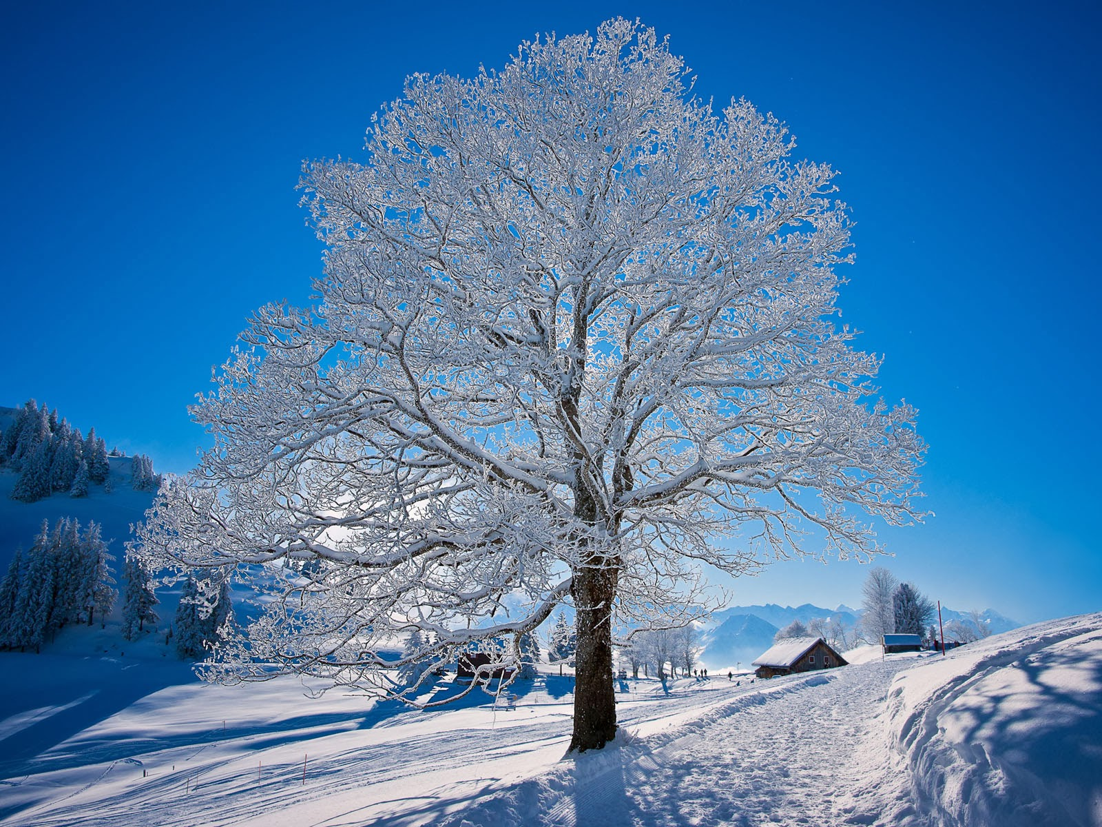 wallpapers: White Tree Wallpapers