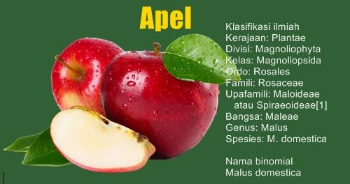 Manfaat Buah Apel Mulai Dari Antioksidan Hingga Anti Kanker