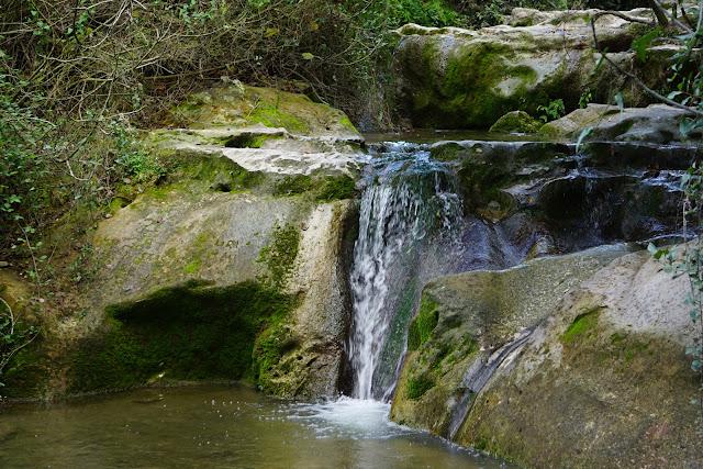מים נובעים בנחל השופט