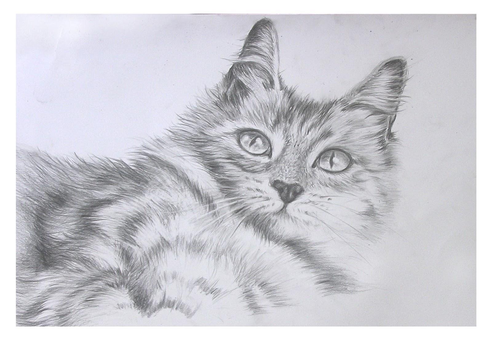 Download 78+  Gambar Kucing Lukisan Terlihat Keren HD