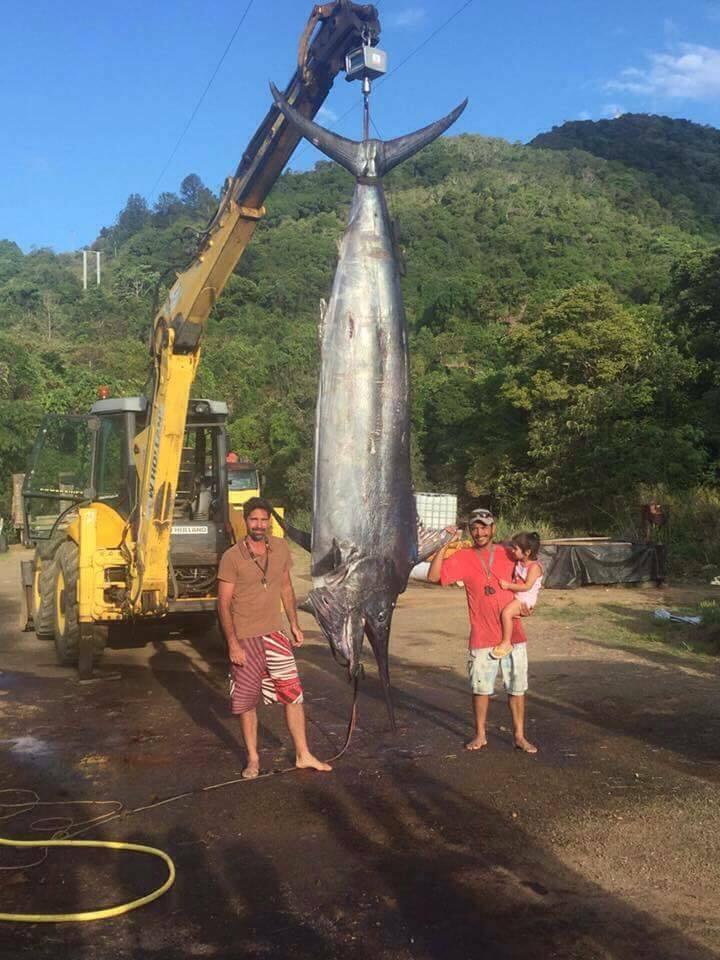 International Fishing News: NEW CALEDONIA: monster huge ...