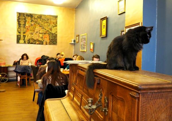 le café des chats rue sedaine